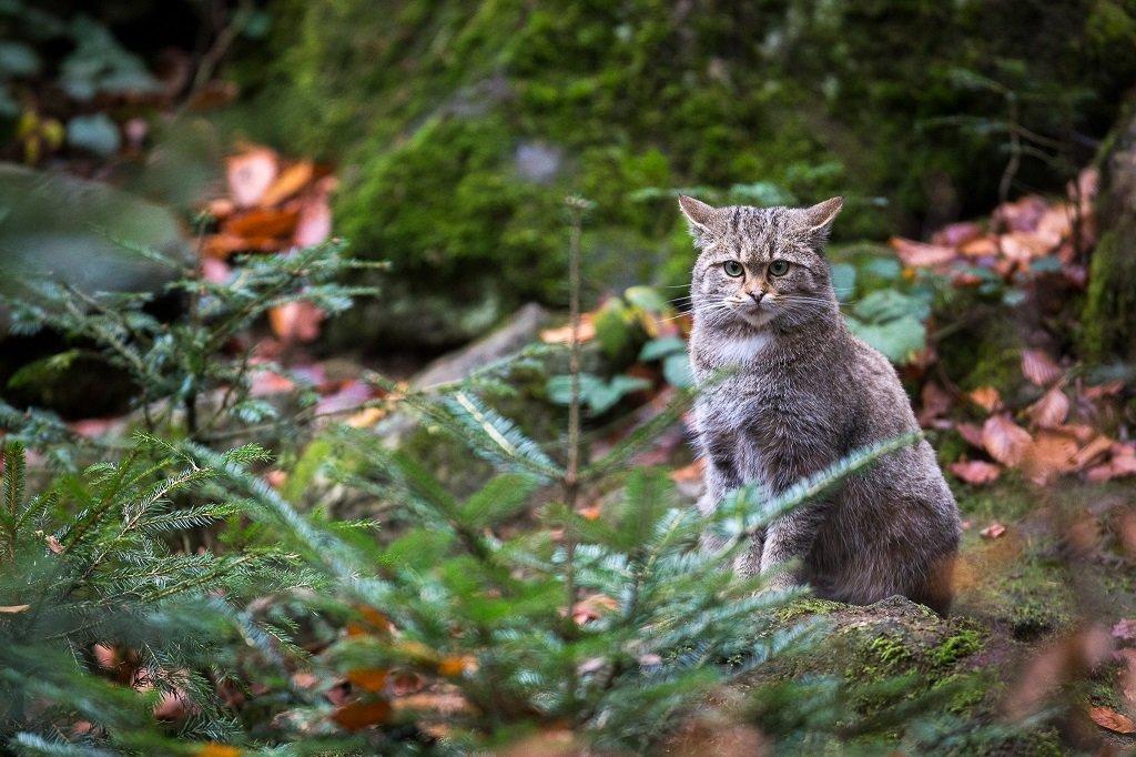 KURZ - Fotografujeme zvířata v Bavorském lese VOUCHER
